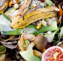Food waste on compost heap