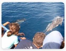 La-cura-dei-delfini-e-del-mare-Volontariato-Puglia---storie-e-notizie-di-cittadinanza-attiva-Giugno-2021