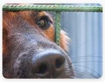 La-rete-è-la-miglior-cura-anche-per-gli-animali-Volontariato-Puglia---storie-e-notizie-di-cittadinanza-attiva-Giugno-2021