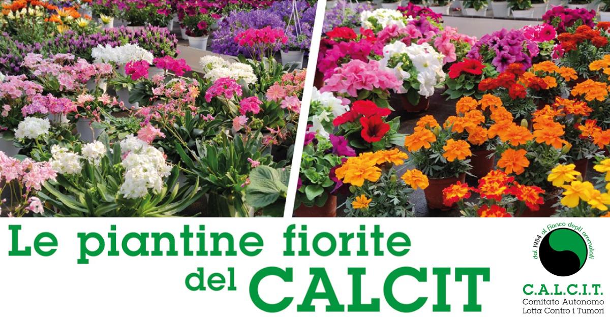Banner-Le-piantine-fiorite-del-CALCIT-Andria