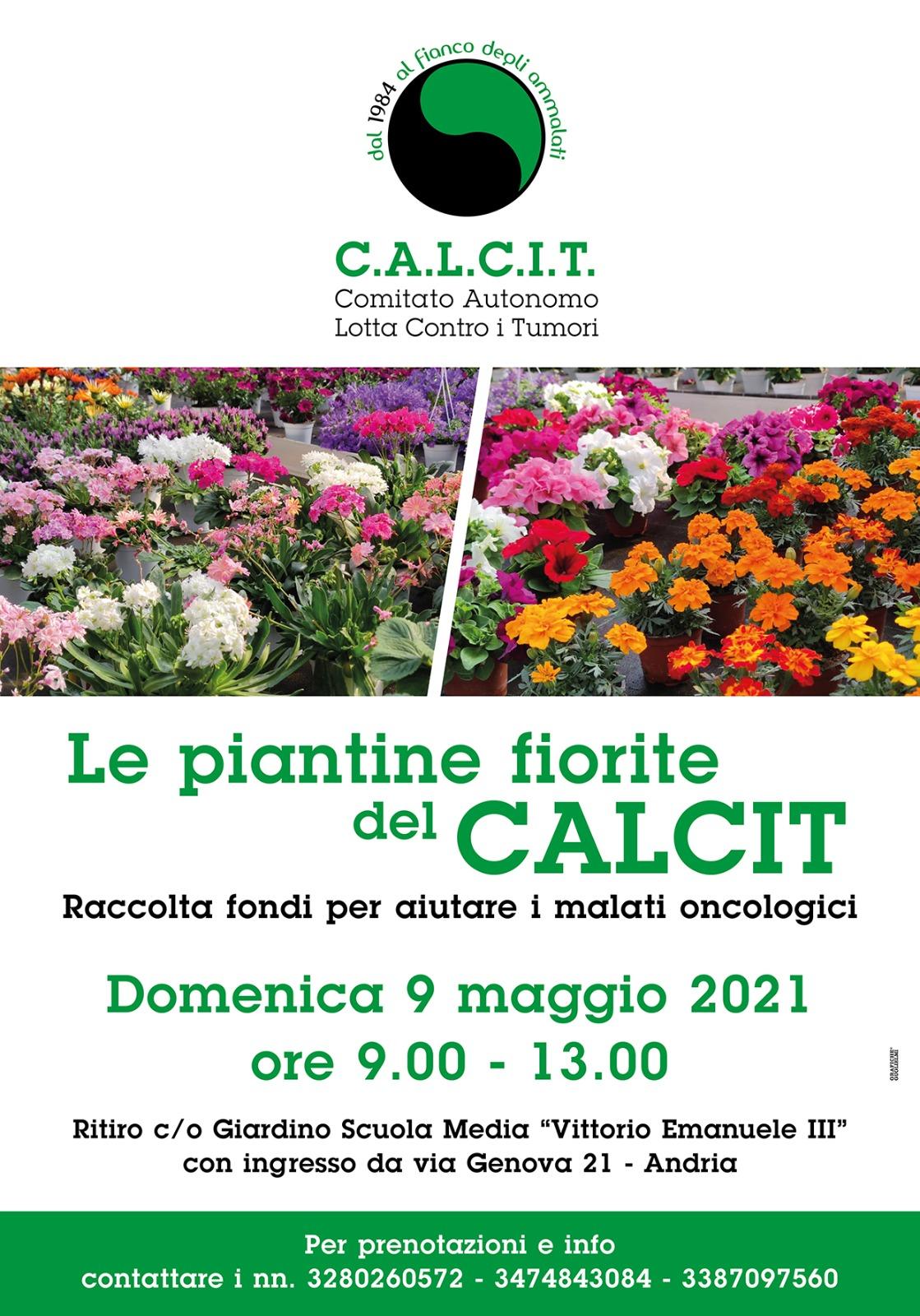 Locandina Le piantine fiorite del CALCIT Andria